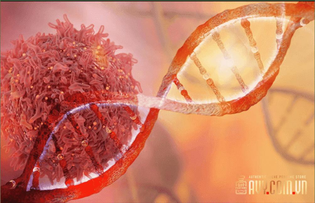 Tác dụng của saffron - Chống ung thư mạnh mẽ