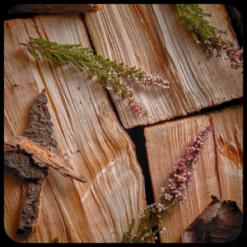 Nước hoa hương gỗ Woody